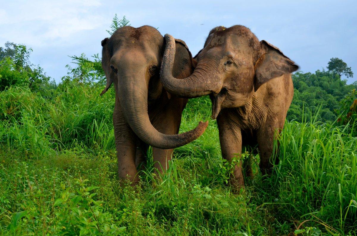 Фото слонов Вьетнама