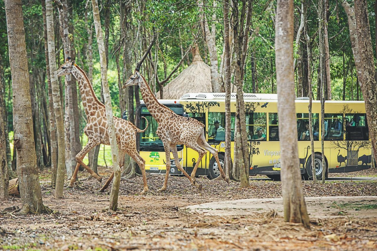 Полезные сведения о Сафари парке