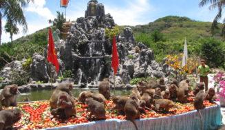 Особенности острова обезьян в Нячанге