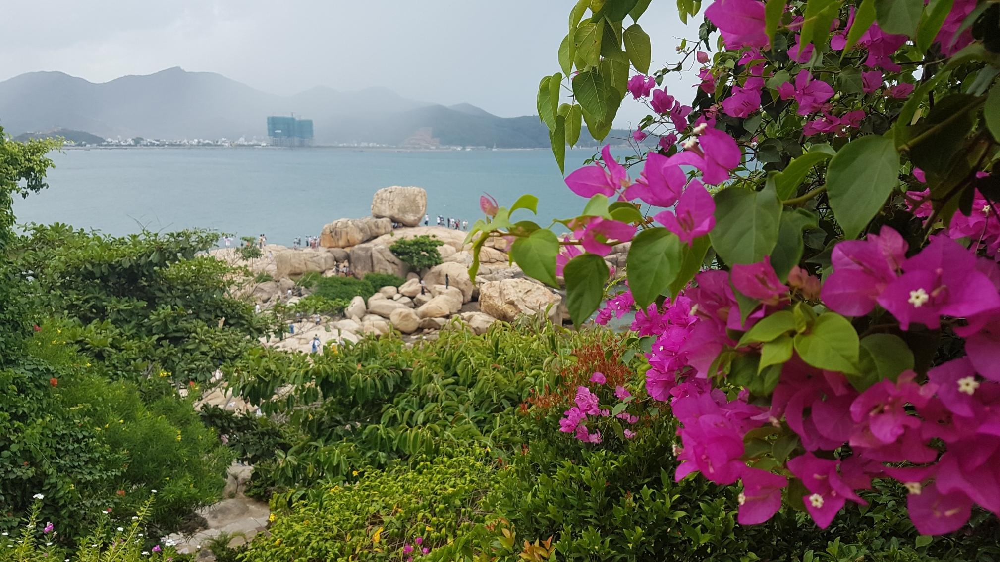 Фото острова с цветущими орхидеями в Нячанге