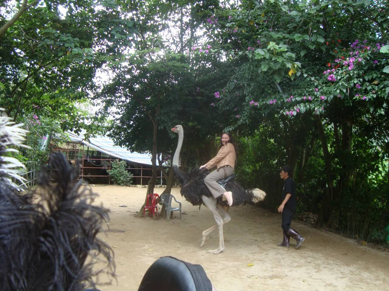Фото катания на страусах на острове Орхидей