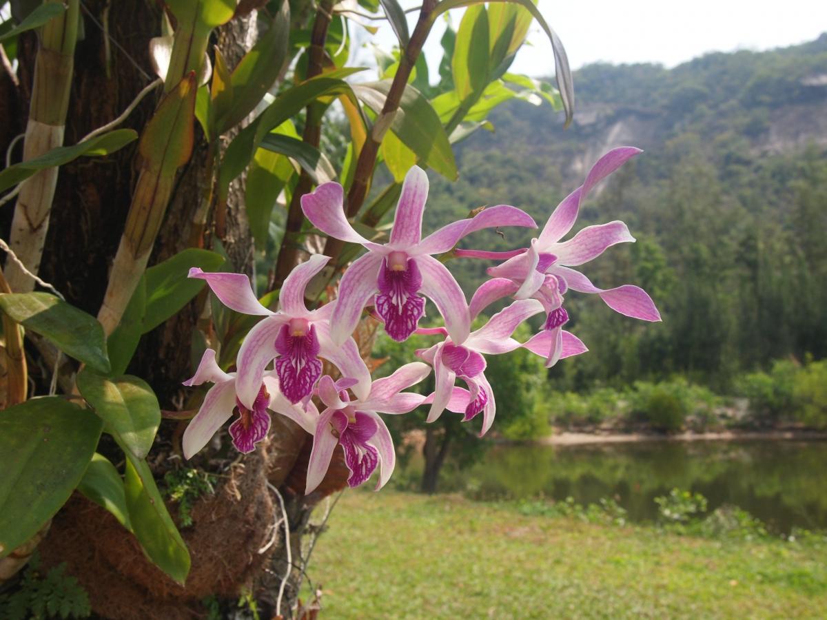 Фото орхидей на острове