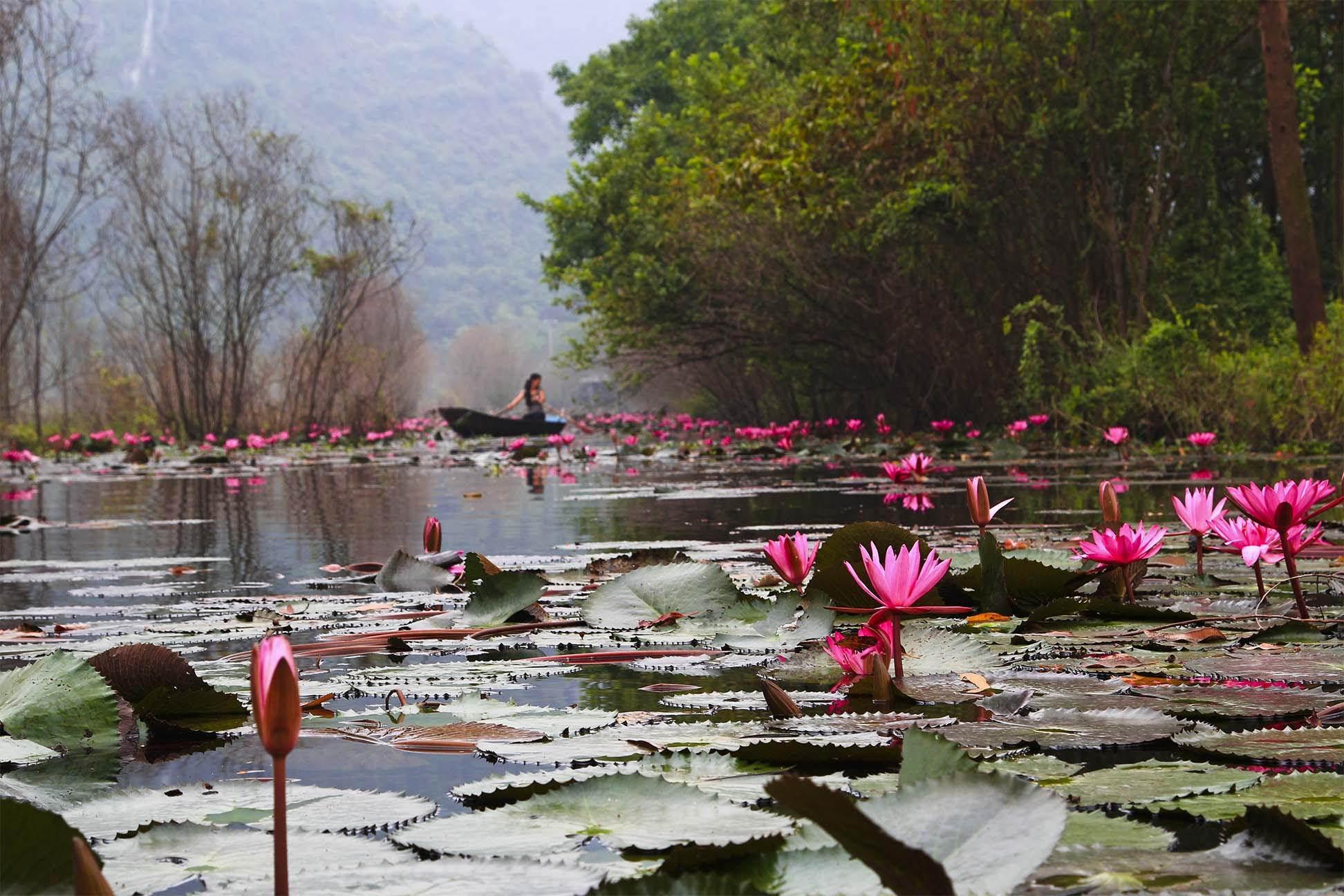 Фото озера лотосов