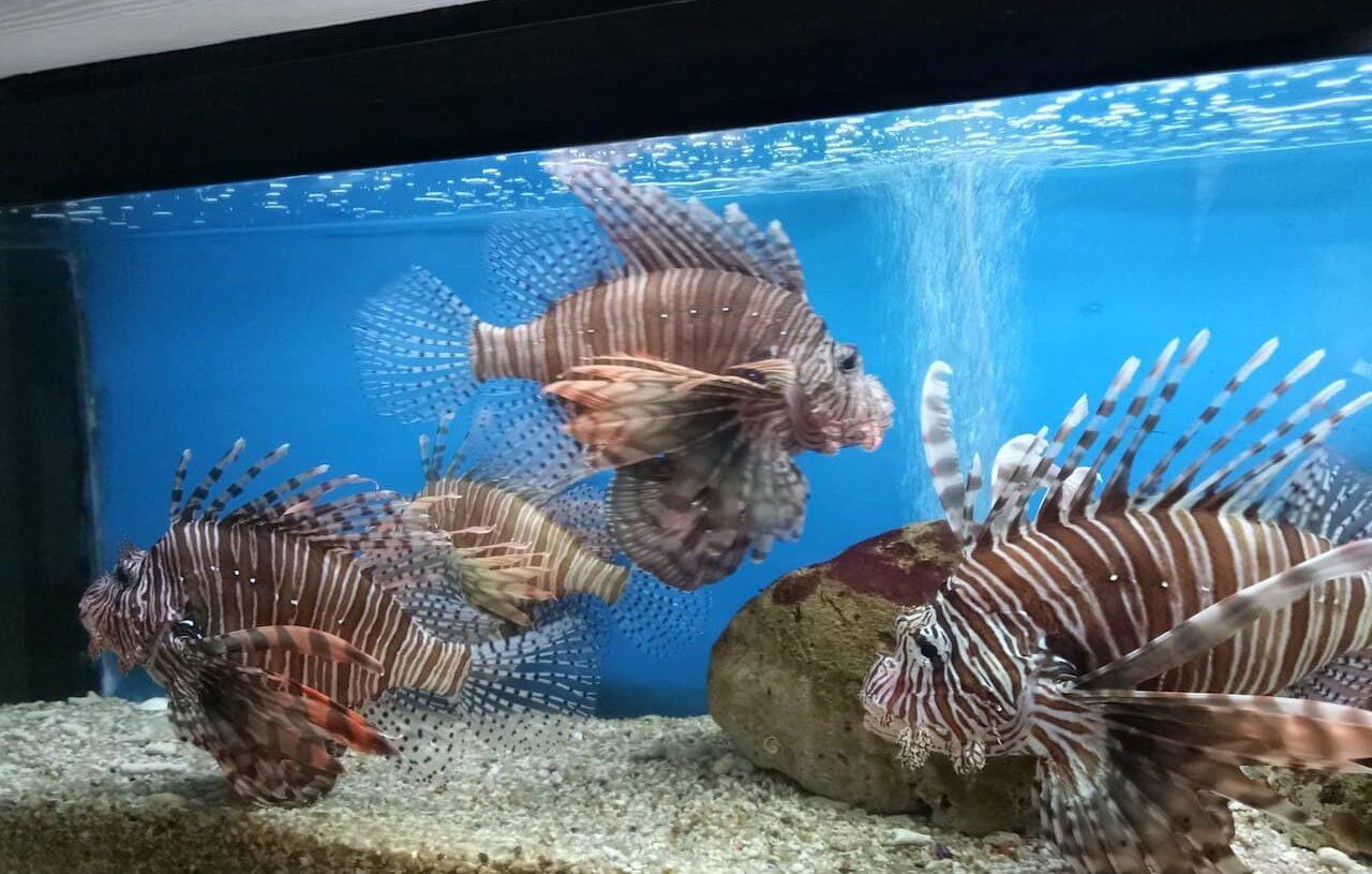 Фото музея Океанографии