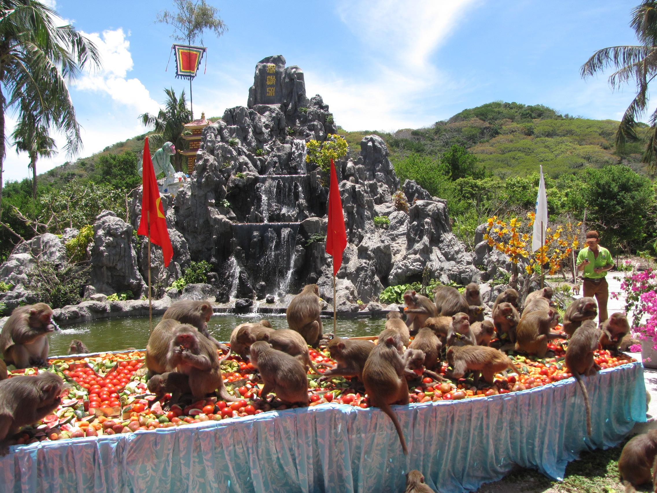 Фото острова обезьян